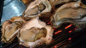 本日、大人気の岩牡蠣が入荷します!