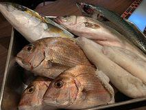 石川県能登島 漁師角屋さんから、鮮魚達が届きました♪